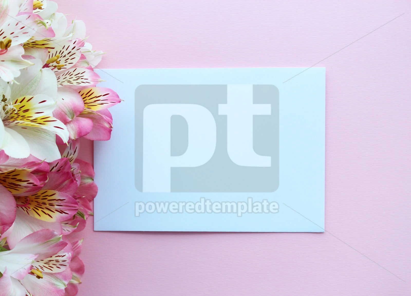 Beautiful pink summer card with pink and white flowers, 16396, Holidays — PoweredTemplate.com