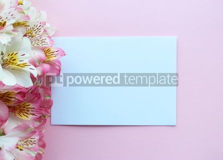 Holidays: Beautiful pink summer card with pink and white flowers #16396