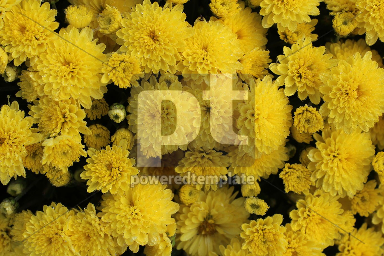 Autumn background with bright yellow flowers, 16419, Nature — PoweredTemplate.com