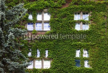Architecture : Building wall covered with green ivy plants #16434