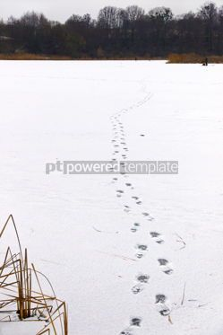 Nature: Footprints on the ice of a frozen lake #16446