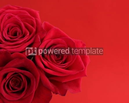 Holidays: Red roses on red background #18029