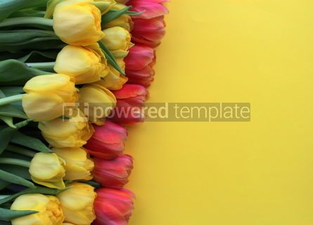 Holidays: Yellow and red tulips on yellow background #18030