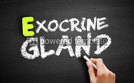 Business: Hand writing Exocrine gland on blackboard concept background #18207