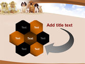 Pets Free PowerPoint Template#11