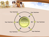 Pets Free PowerPoint Template#7