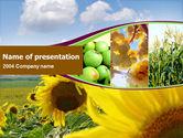 Agriculture: Sonnenblume apfel traube und mais PowerPoint Vorlage #00076