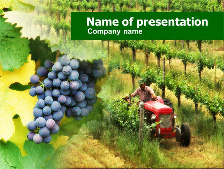 Agriculture: Grape Field PowerPoint Template #00586