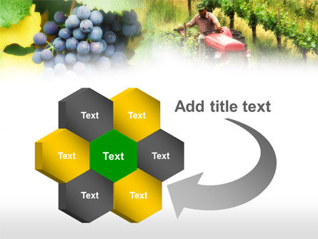Grape Field PowerPoint Template Slide 11