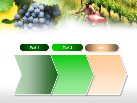 Grape Field PowerPoint Template Slide 16