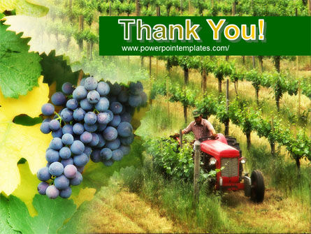 Grape Field PowerPoint Template Slide 20