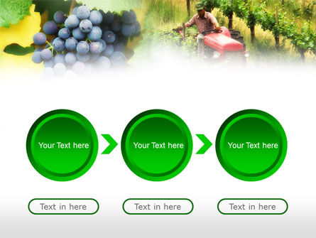 Grape Field PowerPoint Template Slide 5