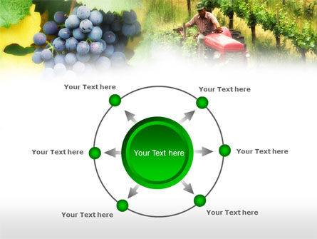Grape Field PowerPoint Template Slide 7