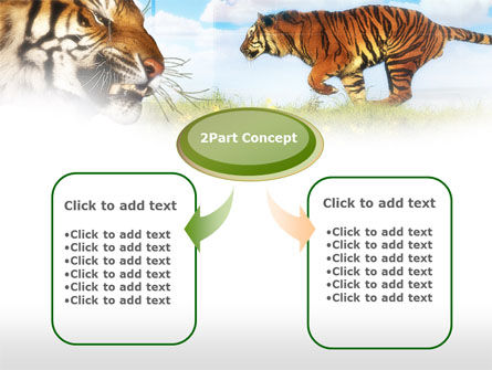 Tiger PowerPoint Template, Slide 4, 00669, Animals and Pets — PoweredTemplate.com