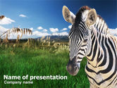 Animals and Pets: Zebra On A Green Savanna PowerPoint Template #00697