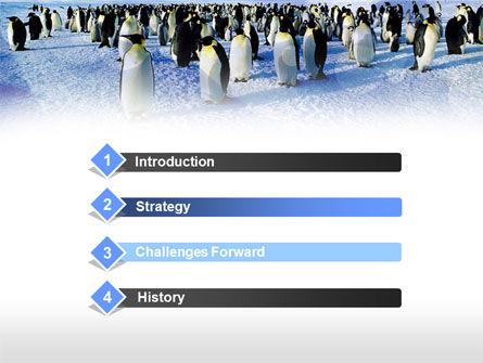 Penguins PowerPoint Template, Slide 3, 00794, Animals and Pets — PoweredTemplate.com