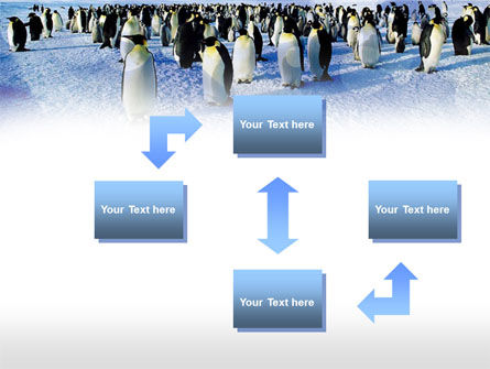 Penguins PowerPoint Template, Slide 4, 00794, Animals and Pets — PoweredTemplate.com