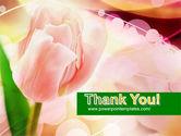 Light Pink Tulip PowerPoint Template#20