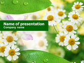 Nature & Environment: Templat PowerPoint Camomiles #00818