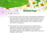 Camomiles PowerPoint Template#2