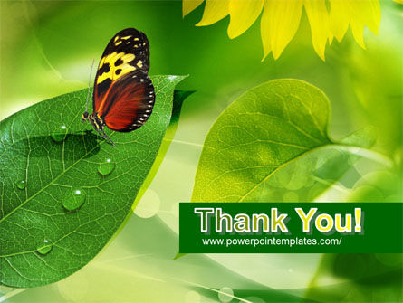 Butterfly On The Leaf PowerPoint Template Slide 20