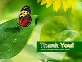 Butterfly On The Leaf PowerPoint Template#20