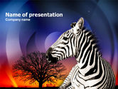 Animals and Pets: Zebra In Sunset Free PowerPoint Template #00845