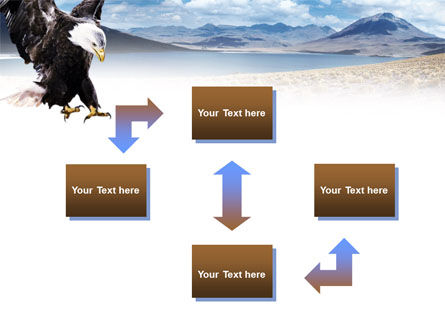 North American Eagle PowerPoint Template, Slide 4, 00863, Animals and Pets — PoweredTemplate.com