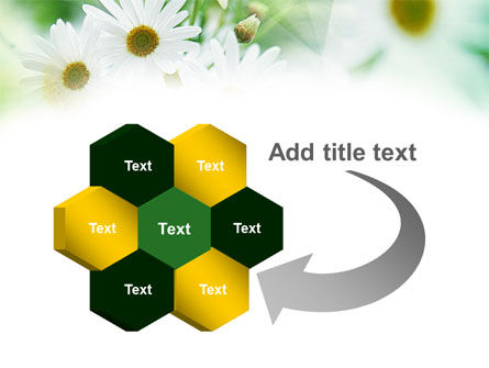 Daisies PowerPoint Template Slide 11