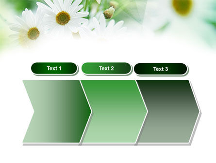 Daisies PowerPoint Template Slide 16