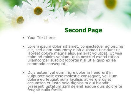 Daisies PowerPoint Template, Slide 2, 00874, Nature & Environment — PoweredTemplate.com