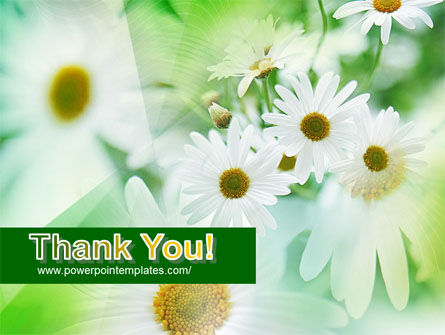 Daisies PowerPoint Template Slide 20