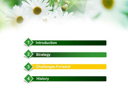 Daisies PowerPoint Template, Slide 3, 00874, Nature & Environment — PoweredTemplate.com