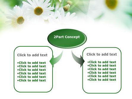 Daisies PowerPoint Template, Slide 4, 00874, Nature & Environment — PoweredTemplate.com
