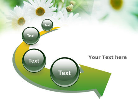 Daisies PowerPoint Template Slide 6