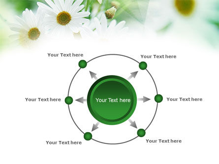 Daisies PowerPoint Template Slide 7