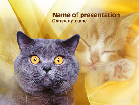 Blue Cat PowerPoint Template, 00882, Animals and Pets — PoweredTemplate.com