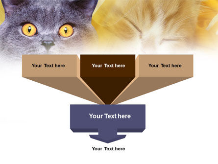 Blue Cat PowerPoint Template, Slide 3, 00882, Animals and Pets — PoweredTemplate.com