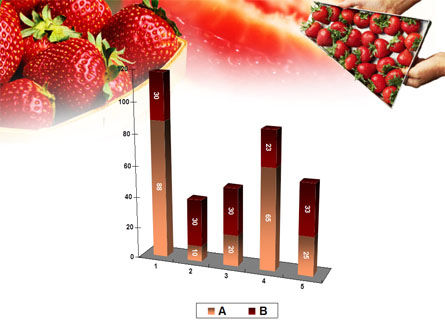 Strawberry Farming PowerPoint Template Slide 17