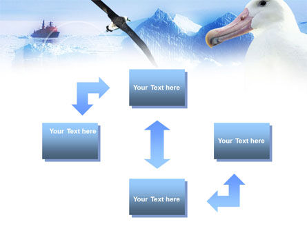 Polar Gull PowerPoint Template, Slide 4, 00917, Animals and Pets — PoweredTemplate.com