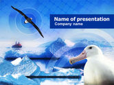 Animals and Pets: Polar Gull PowerPoint Template #00917