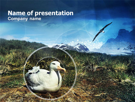 Animals and Pets: Ornithology Of High Latitudes PowerPoint Template #00918