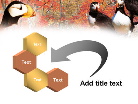 Ornithology PowerPoint Template Slide 11
