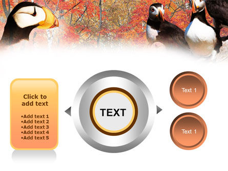 Ornithology PowerPoint Template Slide 12