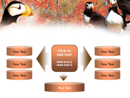 Ornithology PowerPoint Template Slide 13