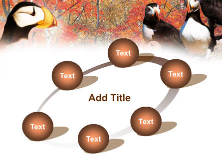 Ornithology PowerPoint Template Slide 14