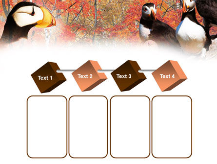Ornithology PowerPoint Template Slide 18