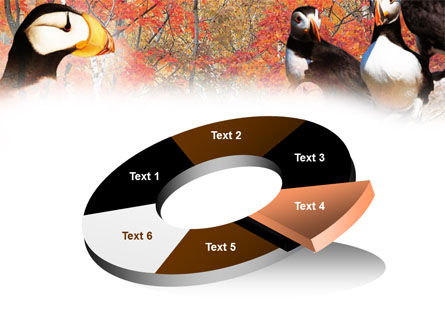 Ornithology PowerPoint Template Slide 19