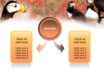 Ornithology PowerPoint Template Slide 4