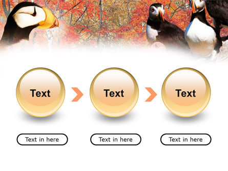 Ornithology PowerPoint Template Slide 5